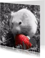 Dierenkaarten - Don't eat my strawberry - DH