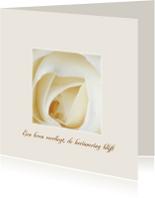 Condoleancekaarten - een leven vervliegt - witte roos