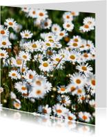 Bloemenkaarten - fleurig voorjaar