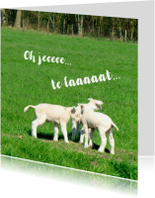 Verjaardagskaarten - Fotokaart 3 Lammetjes in 't gras