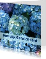 Bloemenkaarten - Fotokaart Hortensia blauw