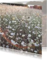 Franse veldbloemen