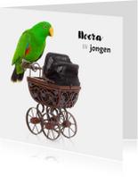 Felicitatiekaarten - Geboortekaart   Hoera een jongen   Papegaai kinderwagen