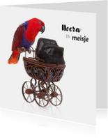 Felicitatiekaarten - Geboortekaart   Hoera een meisje   Papegaai kinderwagen