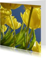 Bloemenkaarten - gele tulpen 1