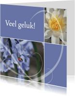 Wenskaarten divers - Gelukskaart