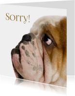 Sorry kaarten - Hond kijkt schuldig-isf