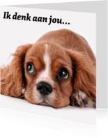 Sterkte kaarten - Ik denk aan jou hond