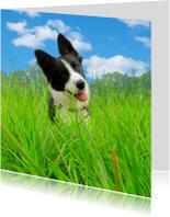 Dierenkaarten - Kaart Hond in het gras