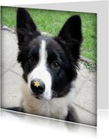 Dierenkaarten - Kaart Hond met bloemetje