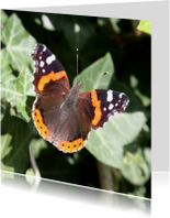 Dierenkaarten - Kaart met vlinder