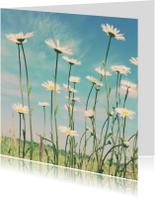 Bloemenkaarten - Kamille in't veld