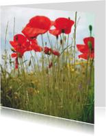 Bloemenkaarten - klaprozen in een bloemenveld