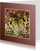 Dierenkaarten - Klein&Vierkant-Papiervlinder
