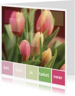 Kleurpalet kaart geelrose tulp
