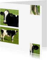 Dierenkaarten - Koe in beeld