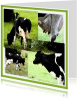 Dierenkaarten - koeien-geverfd