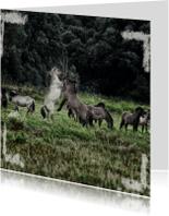 Dierenkaarten - koningspaarden4