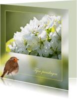 Paaskaarten - Lentebloesem - roodborst