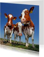 Leuke dierenkaart met mooie koeien
