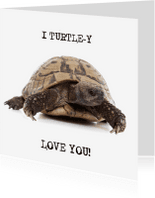 Liefde kaarten - Liefde - I Turtle-y Love You