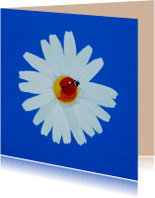 Bloemenkaarten - Lieveheersbeestje op bloem
