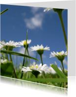 Bloemenkaarten - madeliefjes kaart
