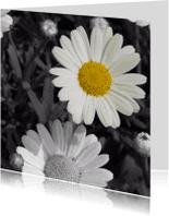 Sterkte kaarten - Margriet kleuraccent