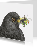 Kunstkaarten - 'Merel'