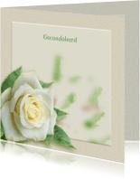 Condoleancekaarten - Mooie rouwkaart met een witte roos