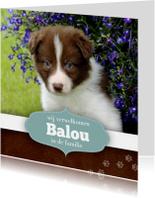Dierenkaarten - Nieuwe puppy
