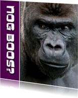 Sorry kaarten - NOG BOOS - gorilla - OT