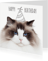 Verjaardagskaarten - Not so happy birthday cat