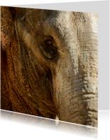 Dierenkaarten - Olifant close-up