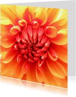 Wenskaarten divers - Oranje dahlia