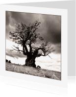 Kunstkaarten - oude eik