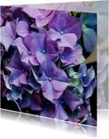 Bloemenkaarten - paarse hortensia