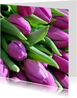 Bloemenkaarten - Paarse tulpen