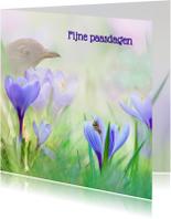 Paaskaarten - Pasen met krokussen