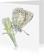Dierenkaarten - Pentekening Blauwtje kleur