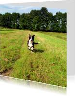 Dierenkaarten - Rennende puppy