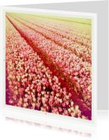 Bloemenkaarten - rijen tulpen met warme gloed