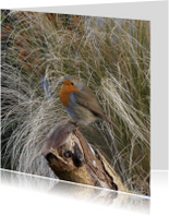 Dierenkaarten - Robin