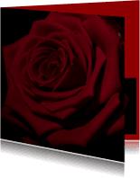 Bloemenkaarten - rode roos in close up