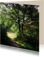 Rouwkaarten - rouwkaart bospad in zon bedankt
