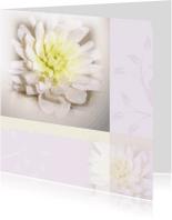 Rouwkaarten - rouwkaart dahlia zachte tinten