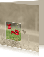 Rouwkaarten - rouwkaart klaprozen