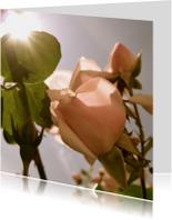 Bloemenkaarten - roze roos