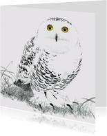 Kunstkaarten - Sneeuwuil (vrouwtje)
