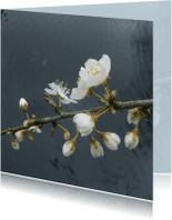 Bloemenkaarten - Spring